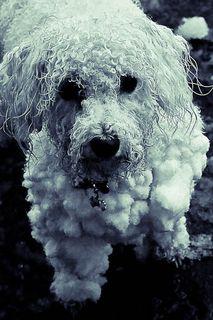 RLS_091219_015_snowdogs-TPad